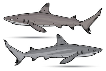 Two cartoon sharks isolated on white background.