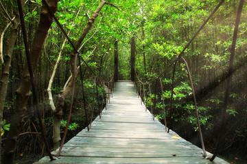 Most wiszący w lesie