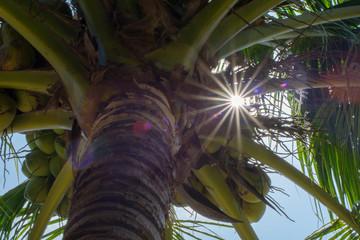 coconut tree background