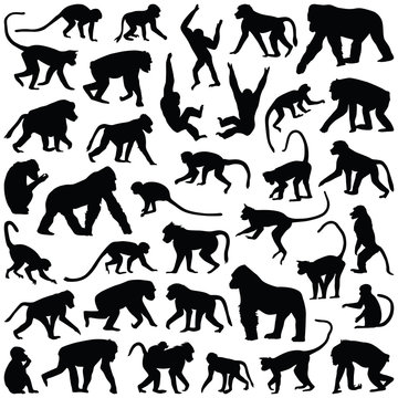Ape and Monkey collection - vector silhouette