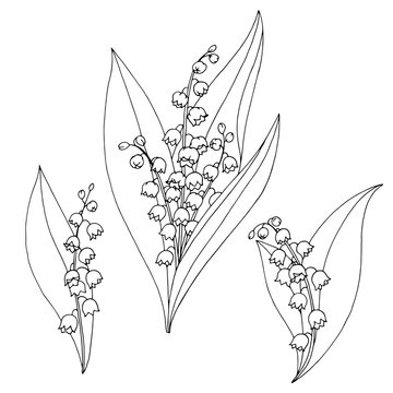 Lily of the valley flower graphic black white isolated sketch illustration vector