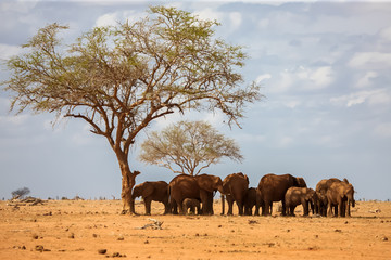 An elephant family is standing under the tree, on safari in Kenya