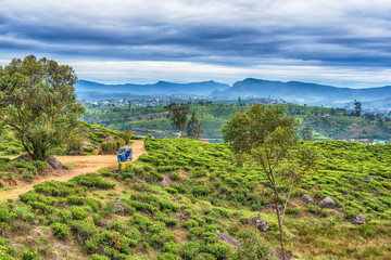 Sri Lanka: famous Ceylon highland tea fields in Nuwara Eliya