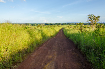 Typical African dirt and mud track with high elephant grass growing on either side, Gabon, Central Africa