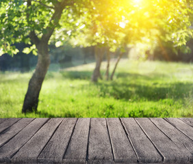 summer garden and wooden plank