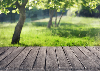 summer garden and wooden plank