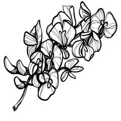 Эскиз красивого цветка татуировка