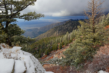 Vibrant colors of Alpine forest landscape with snow, Sandia Mountains, New Mexico, USA