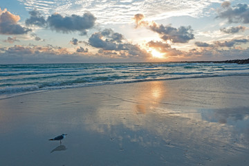 Seagull on Miami Beach Morning Amazing Light