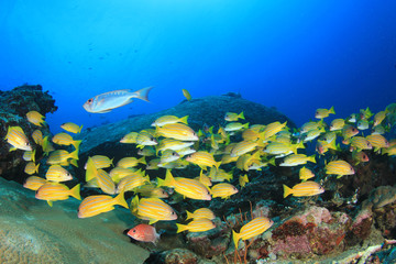 Underwater ocean coral reef and fish