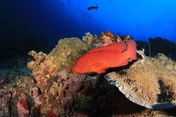 Underwater ocean coral reef and fish
