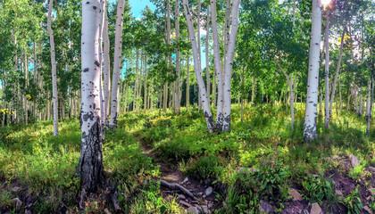 Aspin Trees