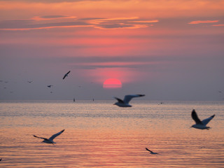 Foto auf Leinwand Rosa hell Sunset sky of light with seagulls in the air, Selective focus at the sun