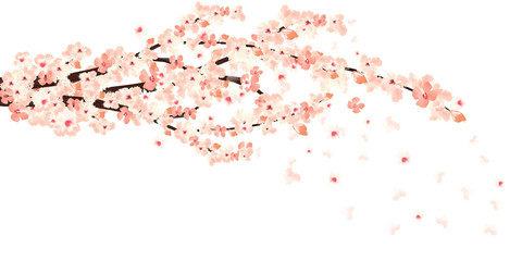 sakura in bloom Wall mural