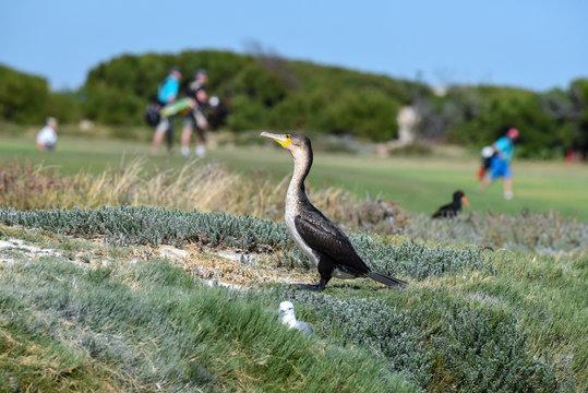 birds on golf course