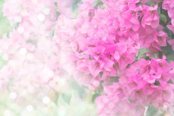flower  Classic