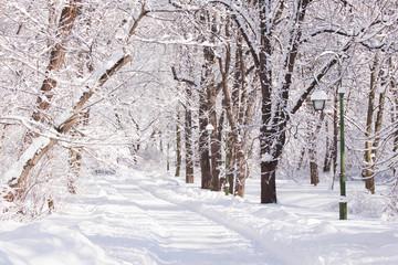 Snowy path amongst trees in Warsaw Lazienki park