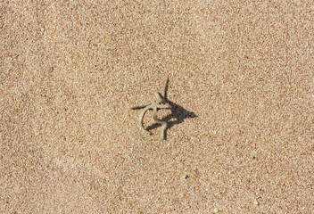 Brown starfish on a beach sand. Ideal as a background for your holiday/vacation/sea-related project photo