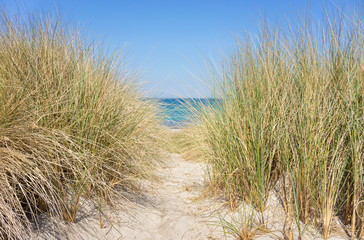 Dünengras am Meer