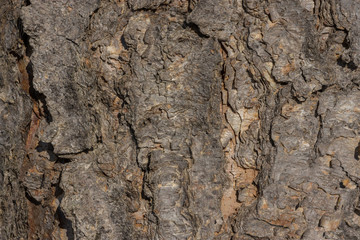 The texture of tree bark up close