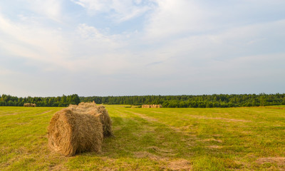 Folded dry hay in the field in summer.