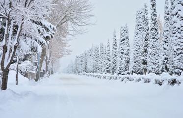 Beyaz Karla Örtülülü Yol