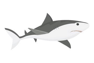 Vector shark character.