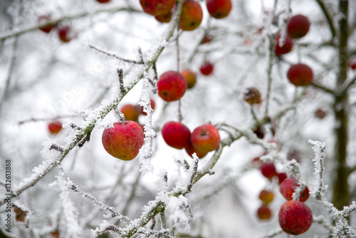 apfelbaum im winter stockfotos und lizenzfreie bilder auf bild 132613868. Black Bedroom Furniture Sets. Home Design Ideas