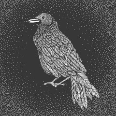 Illustration of raven line art style. Vector illustration of crow hand drawn