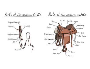 Parts of western saddle and bridle with text letters description. Horse tack. Vector cartoon hand drawing equestrian tools
