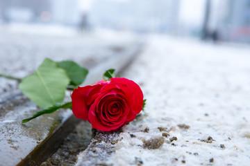 eine rote Rose liegt im schmutzigen Schnee auf den Schienen einer Straßenbahn