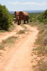 Elefanti Safari Sud Africa