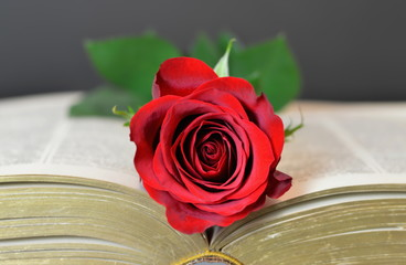 Valentine's Day rose on the opened book