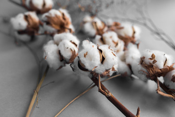 White background with branch of cotton plant. Good spring