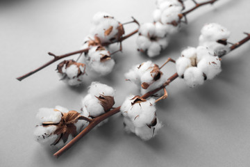 White background with branch of cotton plant