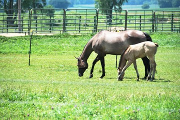 Colt and Mare