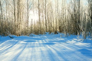 winter landscape with forest and sun. sunshine shine through tre