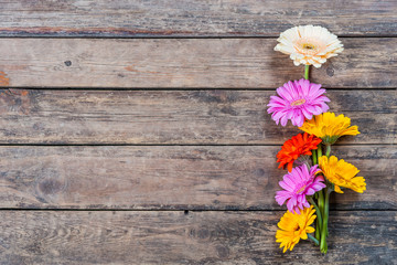 Gerbera Flowers on Wooden Background