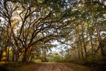 Tallahassee Trees