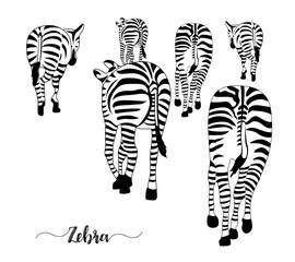 Group of zebras, pose from the back. Striped black and white. Vector illustration isolated  on white background.