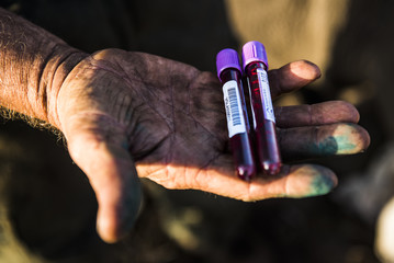 White Rhino blood samples for DNA purposes