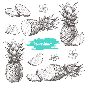 Vector pineapples hand drawn sketch with flowersf.  Sketch vector tropical food illustration. Vintage style