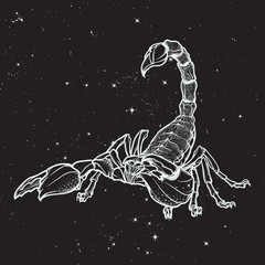 Detailed realistic scorpio drawing on nightsky background. Decorative ornament on the creature back. Tattoo design, zodiac sign concept art, horoscope article illustration. EPS10 vector illustration.