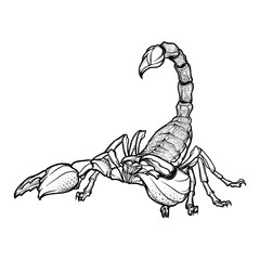 Detailed realistic scorpio drawing isolated on white background. Tattoo design, zodiac sign concept art, horoscope article illustration. Coloring book for adults page. EPS10 vector illustration.