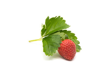 Fototapete - Fresh strawberry with leaves