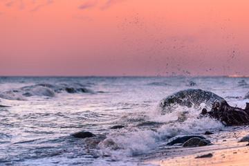 Morning sea coast