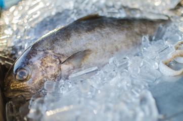 close up fresh fish at the fresh market