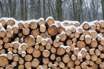 Pile of snow covered freshly sawed logs in winter forest - front view.