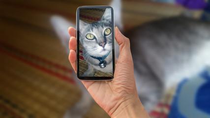 cat, cat on smart phone , take a photo of a cat smartphone