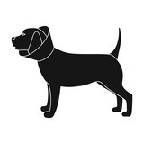 Dog With Elizabethan Collar Icon In Monochrome Style